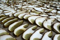 Summer cep mushroom Boletus reticulatus hat and stump sliced. And prepared for drying. Some of the slices are slightly damaged by mushroom worms stock images