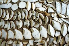 Summer cep mushroom  Boletus reticulatus sliced and prepared for drying Royalty Free Stock Photos
