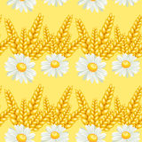 Summer chamomile field Stock Photo
