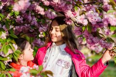 Summer. Childhood beauty. Family day. happy sisters in cherry flower. Sakura blooming. small girl children in spring royalty free stock photography