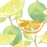 Summer Citrus background. Watercolor background. Stock Photos