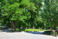 Summer city park at midday, bright sunny day, trees with shadows and green grass Royalty Free Stock Images