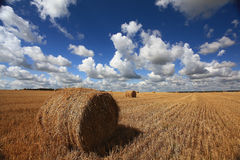 Summer clean field with dry hay Royalty Free Stock Photos