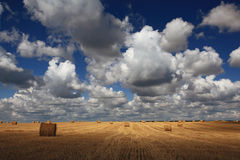 Summer clean field with dry hay Stock Images