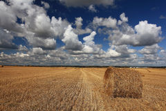 Summer clean field with dry hay Royalty Free Stock Photo