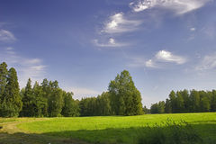 Summer clearing Royalty Free Stock Images