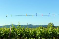 Summer clothes line royalty free stock images