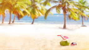Summer coconut drink on the beach Royalty Free Stock Image