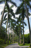 Summer coconut trees in a park. Small coconut trees along the road in summer Stock Photos