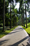 Summer coconut trees in a park. Small coconut trees along the road in summer Stock Image