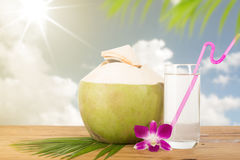 Summer coconut tropical drink Stock Photos