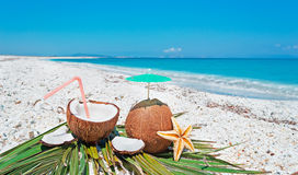 Summer with coconuts Royalty Free Stock Photography