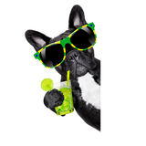 Summer cokctail dog Stock Images