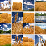 Summer collage. (sixteen squares with different views Royalty Free Stock Image