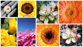Summer collage Stock Images