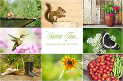 Summer collage. Royalty Free Stock Photo