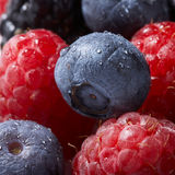 Summer collection of berries. Raspberry and blueberry background Stock Photography