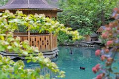 Landscape with pond, wooden gazebo, black swan and wild duck. Royalty Free Stock Photography