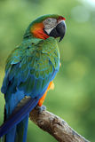 Summer Colors. Beautiful vibrant Parrot perching on a branch against a blurred background Stock Images