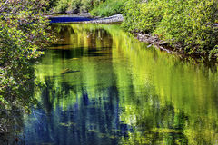 Summer Colors Green Reflection Wenatchee River Washington Stock Image