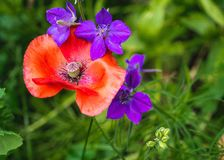 Summer colors. Photo taken this summer with my macro lens Royalty Free Stock Image