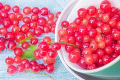 Summer colors. Red currant in a yellow and green cups on a light blue bckground stock image