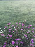 Summer Colors. Thick blanket of grass with summer patio flowers Stock Photos