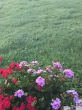 Summer Colors. Thick blanket of grass with summer patio flowers Royalty Free Stock Images
