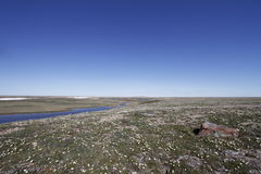 Summer colours in the high arctic with arctic flowers on the tundra near Cambridge Bay Nunavut Stock Photos