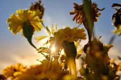 When the summer comes arrived. Morning beautiful sunrise light summer  comes arrived flower object sunshine stock photography