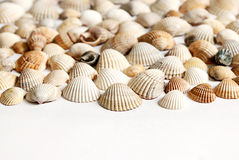 Summer is coming. Small seashells come heralding the approach of summer Royalty Free Stock Photos