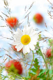 Summer composition royalty free stock image