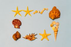 Summer composition. Frame made of different seashells and starfish lying on ligth blue paper background symbolizing the sea. Flat stock photo