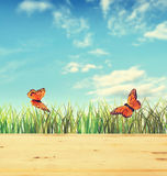Summer composition with green grass and two butterflies Royalty Free Stock Photography