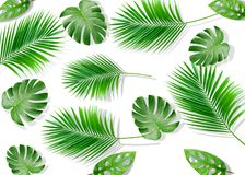 Summer composition. Tropical palm leaves on yellow background. Summer stock image