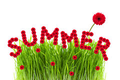 Summer concept. Word summer made of gerber flowers, green grass on white background, summer concept Stock Photos