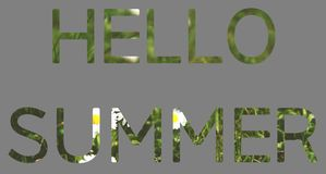 Summer concept, letters HELLO SUMMER of grass and flowers. The words HELLO SUMMER made of green grass and white flowers isolates on gray background text nature royalty free stock image