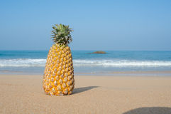 Summer concept with sandy beach and pine apple Royalty Free Stock Images