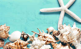 Summer concept. Sea shells on a blue background. Stock Image