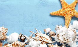 Summer concept. Sea shells and starfish on a blue background. Stock Images