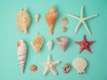 Summer concept with seashells and starfish Stock Photography