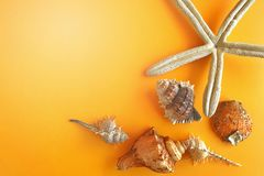 Summer concept. Starfish and seashells on color background.  royalty free stock photo