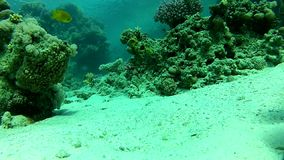 Summer, coral reef. Diving. Underwater life fish on the bottom. The corals and the caves stock video