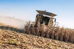 Summer corn harvest Royalty Free Stock Image