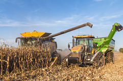 Summer corn harvest Royalty Free Stock Photos