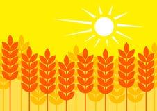 Summer cornfield Stock Image