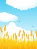Summer cornfield portrait Royalty Free Stock Photos