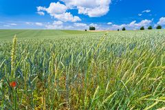 Summer country field Royalty Free Stock Photography