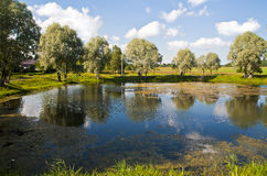Summer country landscape with pond. Royalty Free Stock Images