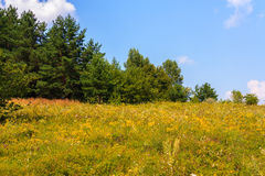 Summer country landscape Stock Photo